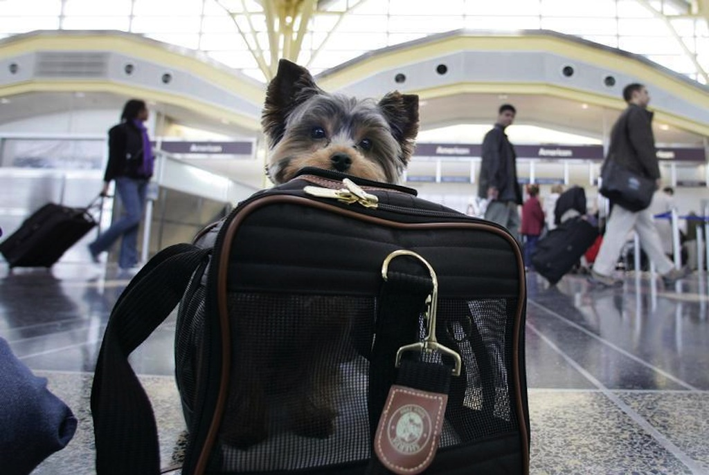 Airline Pet Travel Rules