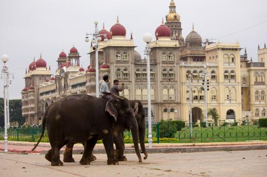 royal-mysore-walks