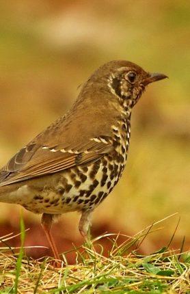 Birding in China